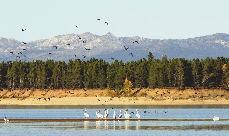 Birds_on_Lake_Cas._10-03.IMG_1424.JPG