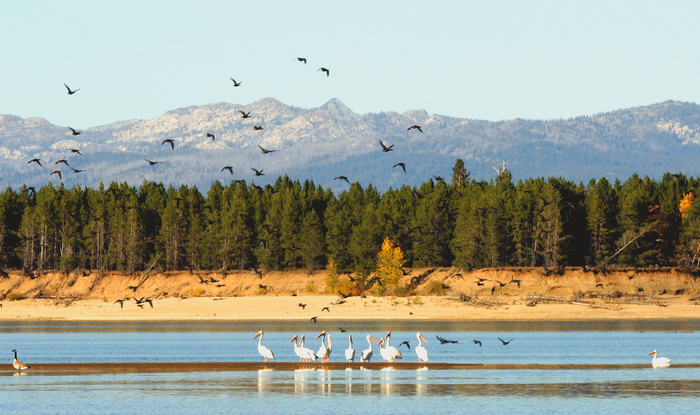 Birds_on_Lake_Cas._10-03.png