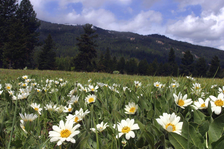 Meadow in Bloom 5-04 056.jpg