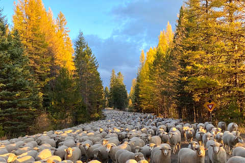Sheep-Migration.png